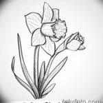 фото Эскизы тату нарцисс от 18.04.2018 №089 - Sketches of daffodil - tatufoto.com