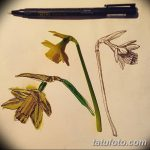 фото Эскизы тату нарцисс от 18.04.2018 №092 - Sketches of daffodil - tatufoto.com