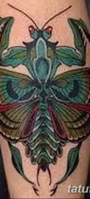 фото тату богомол от 20.04.2018 №010 – mantis tattoo – tatufoto.com