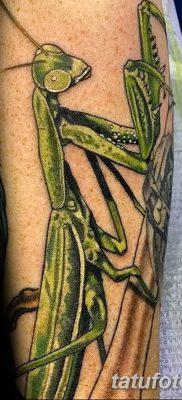 фото тату богомол от 20.04.2018 №044 – mantis tattoo – tatufoto.com
