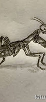 фото тату богомол от 20.04.2018 №048 – mantis tattoo – tatufoto.com