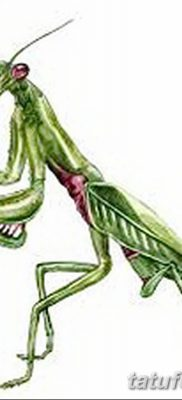 фото тату богомол от 20.04.2018 №049 – mantis tattoo – tatufoto.com