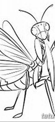 фото тату богомол от 20.04.2018 №050 – mantis tattoo – tatufoto.com