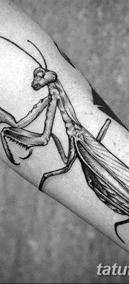 фото тату богомол от 20.04.2018 №055 – mantis tattoo – tatufoto.com