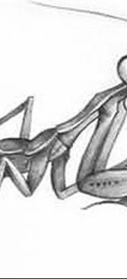 фото тату богомол от 20.04.2018 №056 – mantis tattoo – tatufoto.com