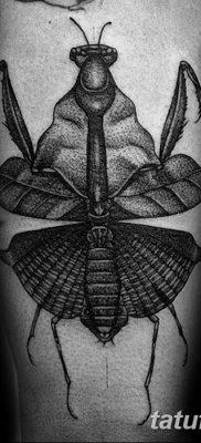 фото тату богомол от 20.04.2018 №069 – mantis tattoo – tatufoto.com