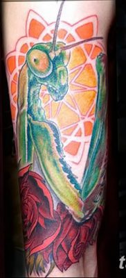 фото тату богомол от 20.04.2018 №076 – mantis tattoo – tatufoto.com