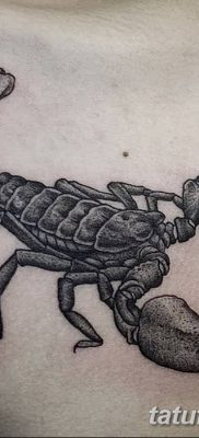 фото тату скорпион от 24.04.2018 №009 — tattoo scorpion — tatufoto.com