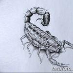 фото эскиз тату скорпион от 24.04.2018 №003 - sketch of a scorpion tattoo - tatufoto.com