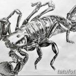 фото эскиз тату скорпион от 24.04.2018 №005 - sketch of a scorpion tattoo - tatufoto.com