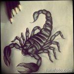 фото эскиз тату скорпион от 24.04.2018 №013 - sketch of a scorpion tattoo - tatufoto.com