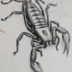 фото эскиз тату скорпион от 24.04.2018 №021 - sketch of a scorpion tattoo - tatufoto.com