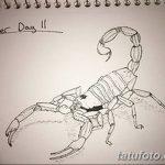 фото эскиз тату скорпион от 24.04.2018 №025 - sketch of a scorpion tattoo - tatufoto.com