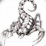 фото эскиз тату скорпион от 24.04.2018 №040 - sketch of a scorpion tattoo - tatufoto.com