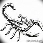фото эскиз тату скорпион от 24.04.2018 №045 - sketch of a scorpion tattoo - tatufoto.com
