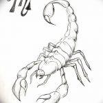 фото эскиз тату скорпион от 24.04.2018 №048 - sketch of a scorpion tattoo - tatufoto.com