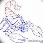 фото эскиз тату скорпион от 24.04.2018 №070 - sketch of a scorpion tattoo - tatufoto.com