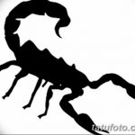 фото эскиз тату скорпион от 24.04.2018 №072 - sketch of a scorpion tattoo - tatufoto.com