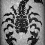 фото эскиз тату скорпион от 24.04.2018 №073 - sketch of a scorpion tattoo - tatufoto.com