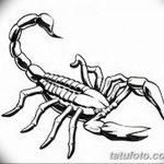 фото эскиз тату скорпион от 24.04.2018 №075 - sketch of a scorpion tattoo - tatufoto.com
