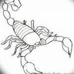 фото эскиз тату скорпион от 24.04.2018 №080 - sketch of a scorpion tattoo - tatufoto.com