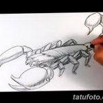 фото эскиз тату скорпион от 24.04.2018 №081 - sketch of a scorpion tattoo - tatufoto.com