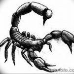 фото эскиз тату скорпион от 24.04.2018 №086 - sketch of a scorpion tattoo - tatufoto.com