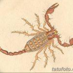 фото эскиз тату скорпион от 24.04.2018 №094 - sketch of a scorpion tattoo - tatufoto.com