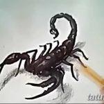 фото эскиз тату скорпион от 24.04.2018 №099 - sketch of a scorpion tattoo - tatufoto.com