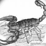 фото эскиз тату скорпион от 24.04.2018 №102 - sketch of a scorpion tattoo - tatufoto.com