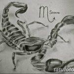 фото эскиз тату скорпион от 24.04.2018 №118 - sketch of a scorpion tattoo - tatufoto.com