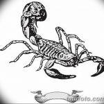 фото эскиз тату скорпион от 24.04.2018 №139 - sketch of a scorpion tattoo - tatufoto.com
