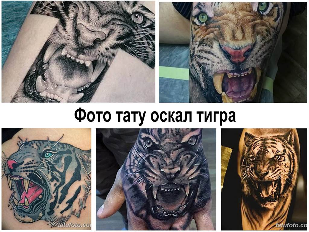 Фото тату оскал тигра - коллекция примеров готовых рисунков татуировок