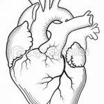 фото Эскизы тату Сердце от 20.06.2018 №030 - Sketches Tattoo Heart - tatufoto.com