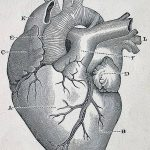 фото Эскизы тату Сердце от 20.06.2018 №038 - Sketches Tattoo Heart - tatufoto.com