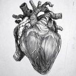 фото Эскизы тату Сердце от 20.06.2018 №063 - Sketches Tattoo Heart - tatufoto.com