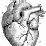 фото Эскизы тату Сердце от 20.06.2018 №183 - Sketches Tattoo Heart - tatufoto.com
