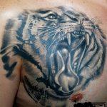 фото татуировка оскал тигра от 01.06.2018 №020 - tiger tattoo - tatufoto.com