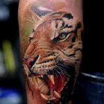 фото татуировка оскал тигра от 01.06.2018 №044 - tiger tattoo - tatufoto.com