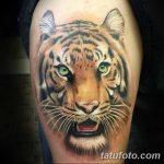 фото татуировка оскал тигра от 01.06.2018 №103 - tiger tattoo - tatufoto.com