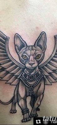 фото тату Кошка с крыльями от 26.06.2018 №049 – Cat tattoo with wings – tatufoto.com