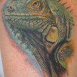 фото тату игуана от 26.06.2018 №003 - tattoo of iguana - tatufoto.com