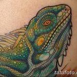 фото тату игуана от 26.06.2018 №007 - tattoo of iguana - tatufoto.com