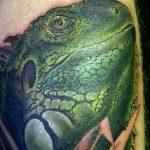 фото тату игуана от 26.06.2018 №016 - tattoo of iguana - tatufoto.com