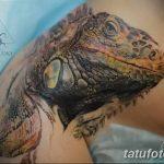 фото тату игуана от 26.06.2018 №029 - tattoo of iguana - tatufoto.com