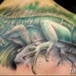 фото тату игуана от 26.06.2018 №048 - tattoo of iguana - tatufoto.com