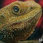 фото тату игуана от 26.06.2018 №053 - tattoo of iguana - tatufoto.com