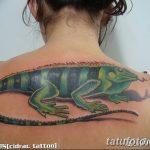фото тату игуана от 26.06.2018 №136 - tattoo of iguana - tatufoto.com