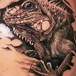 фото тату игуана от 26.06.2018 №170 - tattoo of iguana - tatufoto.com