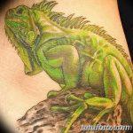 фото тату игуана от 26.06.2018 №173 - tattoo of iguana - tatufoto.com